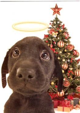 Labrador Retriever Christmas Holiday Cards Art Prints