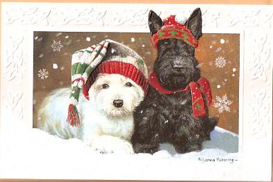 West Highland Terrier Christmas Cards Robert Harrop